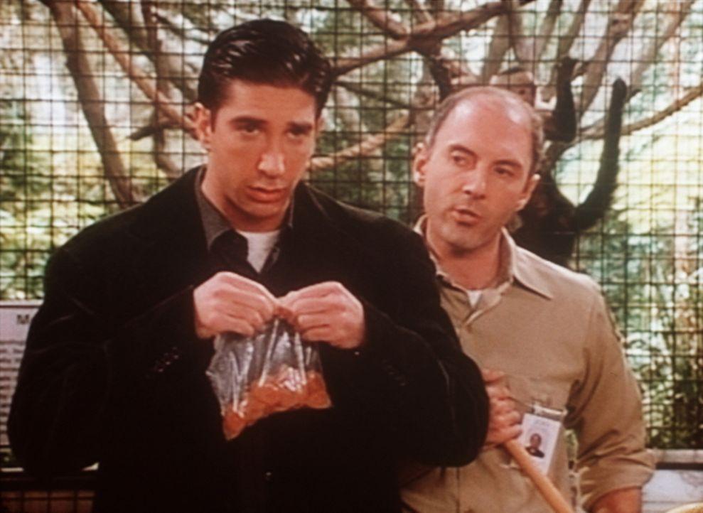 Ross (David Schwimmer, l.) will seinen Affen im Zoo besuchen. - Bildquelle: TM+  2000 WARNER BROS.