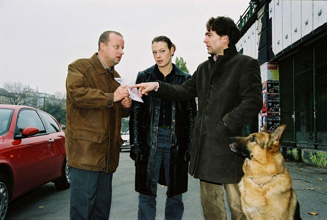 Fritz Kunz (Martin Weinek, l.), Niki (Elke Winkens, M.), Marc (Alexander Pschill, r.) und Rex sind zum Wiener Donaukanal gefahren. Dort wurde eine F... - Bildquelle: Ali Schafler Sat.1