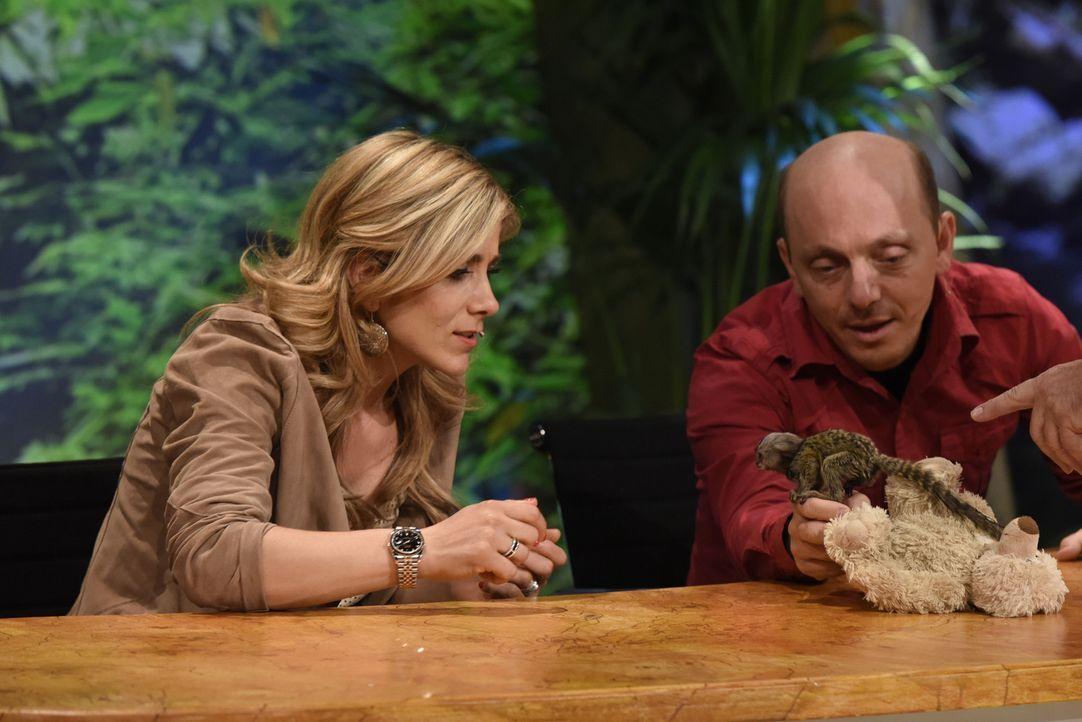 Wie gut kennen sich Panagiota Pedridou (l.) und Bernhard Hoecker (r.) mit dem Affen aus? - Bildquelle: Martin Rottenkolber SAT.1