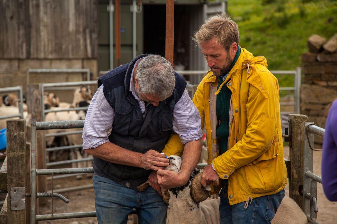 Ben (r.) kann sich nicht mal ansatzweise vorstellen, wie es die Owens schaffen, täglich ihre 1000 Schafe und ihre acht Kinder, von denen vier jünger... - Bildquelle: 2015 BBC / Renegade Pictures