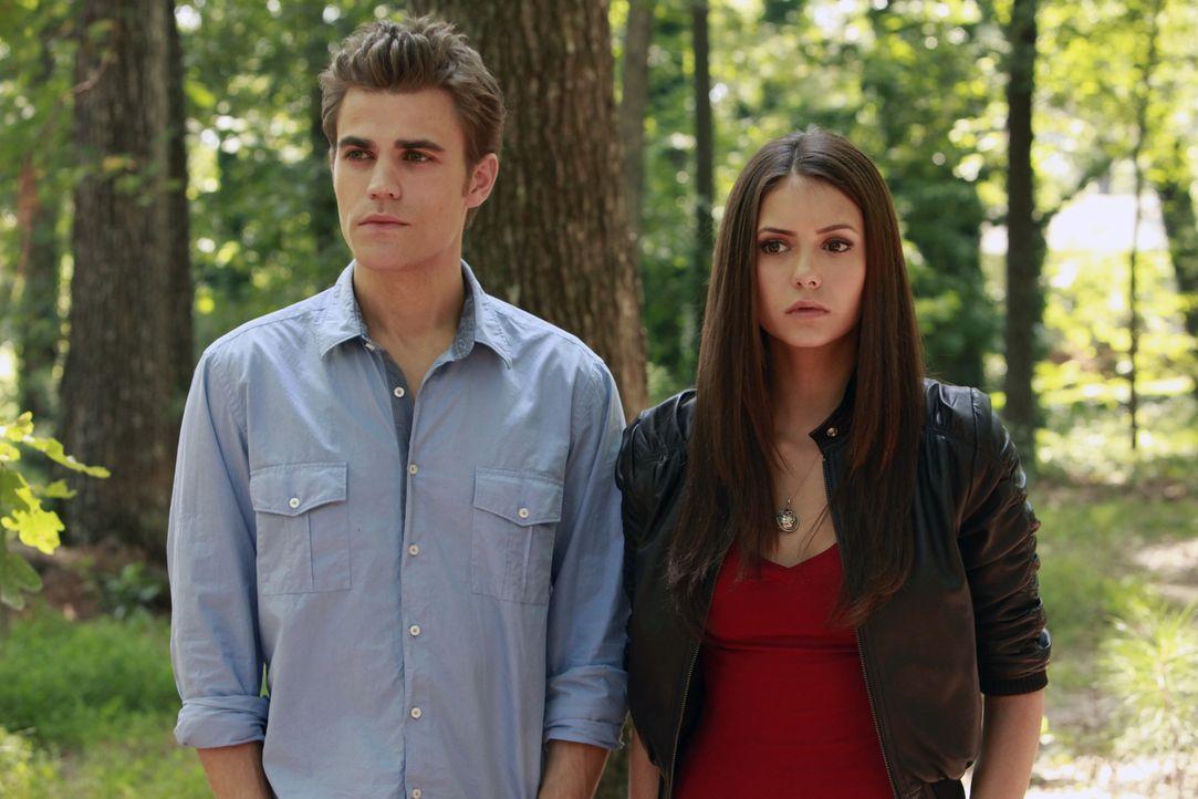 Elena (Nina Dobrev, r.) trägt die schockierende Nachricht, dass Stefan (Paul Wesley, l.) ein Vampir ist mit Fassung ... - Bildquelle: Warner Brothers