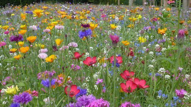 Gartengestaltung_2016_04_05_Blumenwiese anlegen_Schmuckbild_pixabay