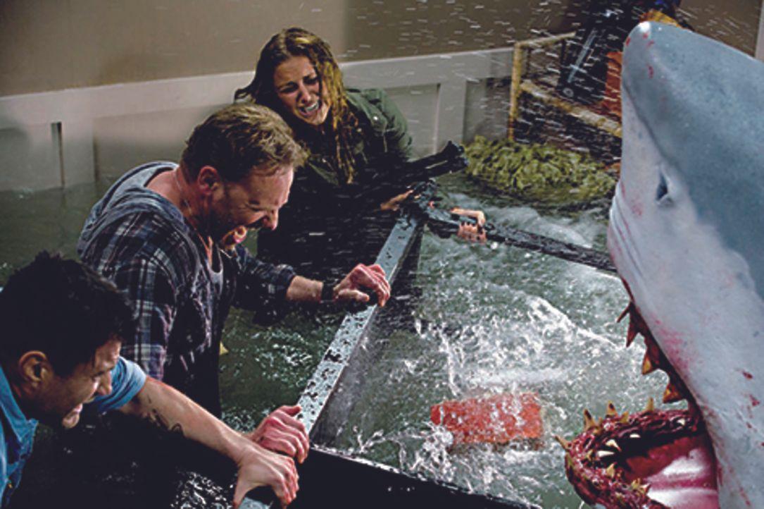 Nehmen den Kampf gegen die Haie auf: Fin (Ian Ziering, M.), George (John Heard, l.) und Nova (Cassandra Scerbo, r.) ... - Bildquelle: 2013, THE GLOBAL ASYLUM INC.  ALL RIGHTS RESERVED.