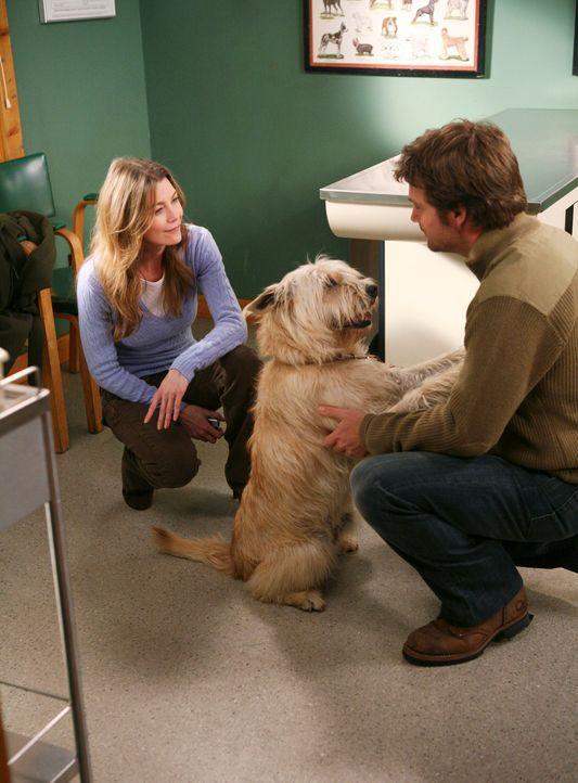 Während sich Meredith (Ellen Pompeo, l.) sehr gut mit Dr. Finn Dandridge (Chris O'Donnell, r.) versteht, wird Derek von Problemen geplagt ... - Bildquelle: Touchstone Television