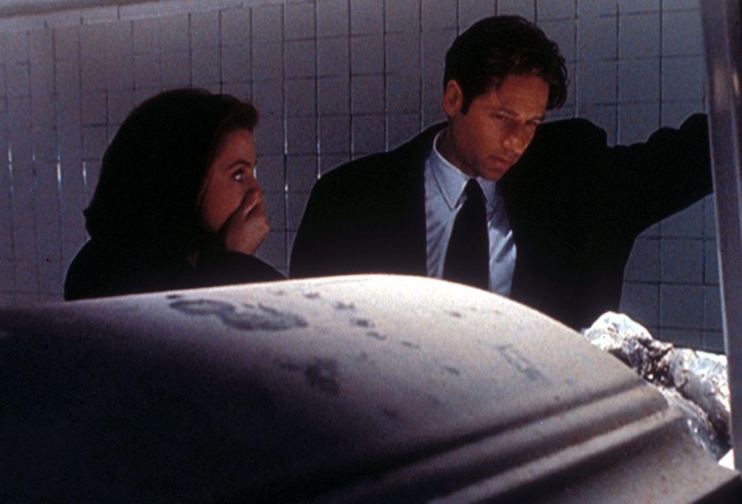 Mulder (David Duchovny, r.) und Scully (Gillian Anderson, l.) schauen sich in der Leichenhalle eines Krankenhauses die enthauptete Leiche eines Mann... - Bildquelle: TM +   2000 Twentieth Century Fox Film Corporation. All Rights Reserved.