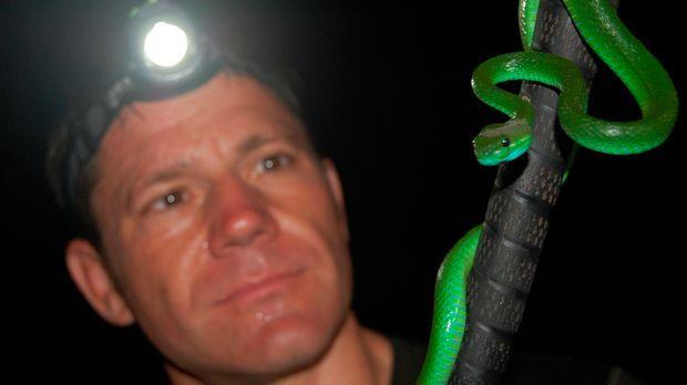 Auf Schlangenjagd: Steve Backshall entdeckt auf einem nächtlichen Streifzug e...