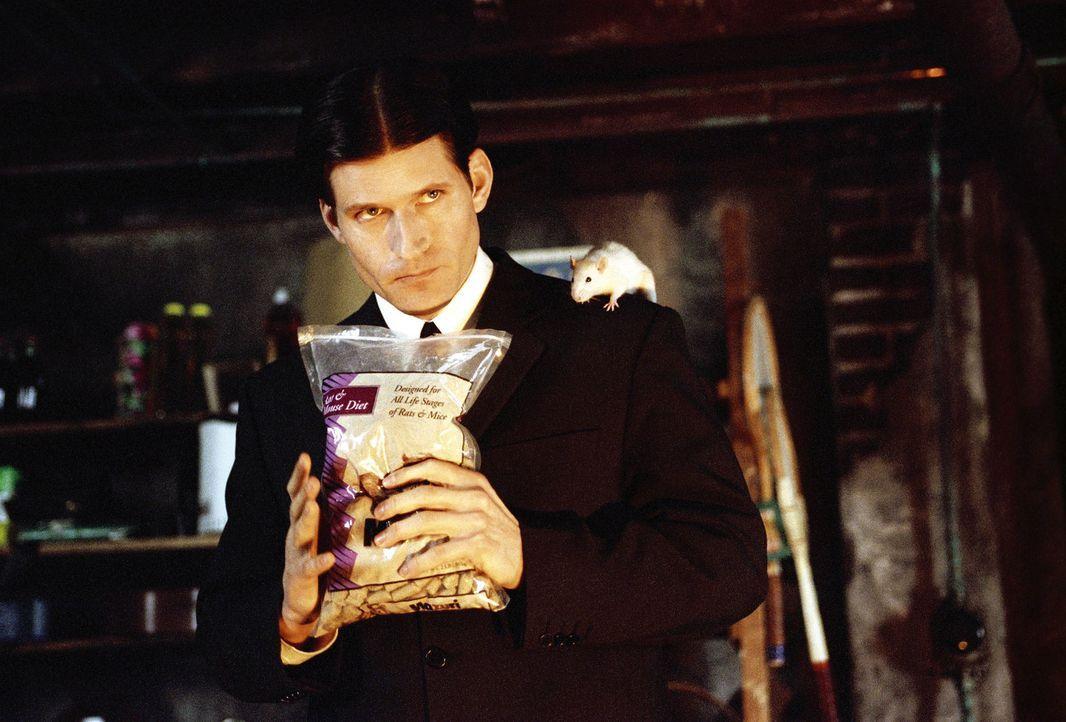 Ständig wird der junge Außenseiter Willard Stiles (Crispin Glover) von seinem Chef gedemütigt. Eines Tages lässt er mit Hilfe seiner tierischen... - Bildquelle: Warner Bros. GmbH