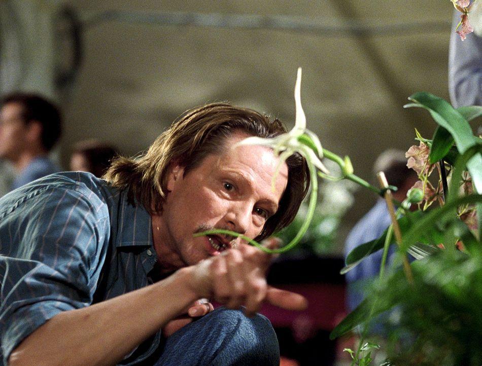 Der Roman der Autorin Susan Orlean, der nun in ein Drehbuch adaptiert werden soll, schildert die Abenteuer des Orchideenwilderers John Laroche (Chri... - Bildquelle: 2003 Sony Pictures Television International