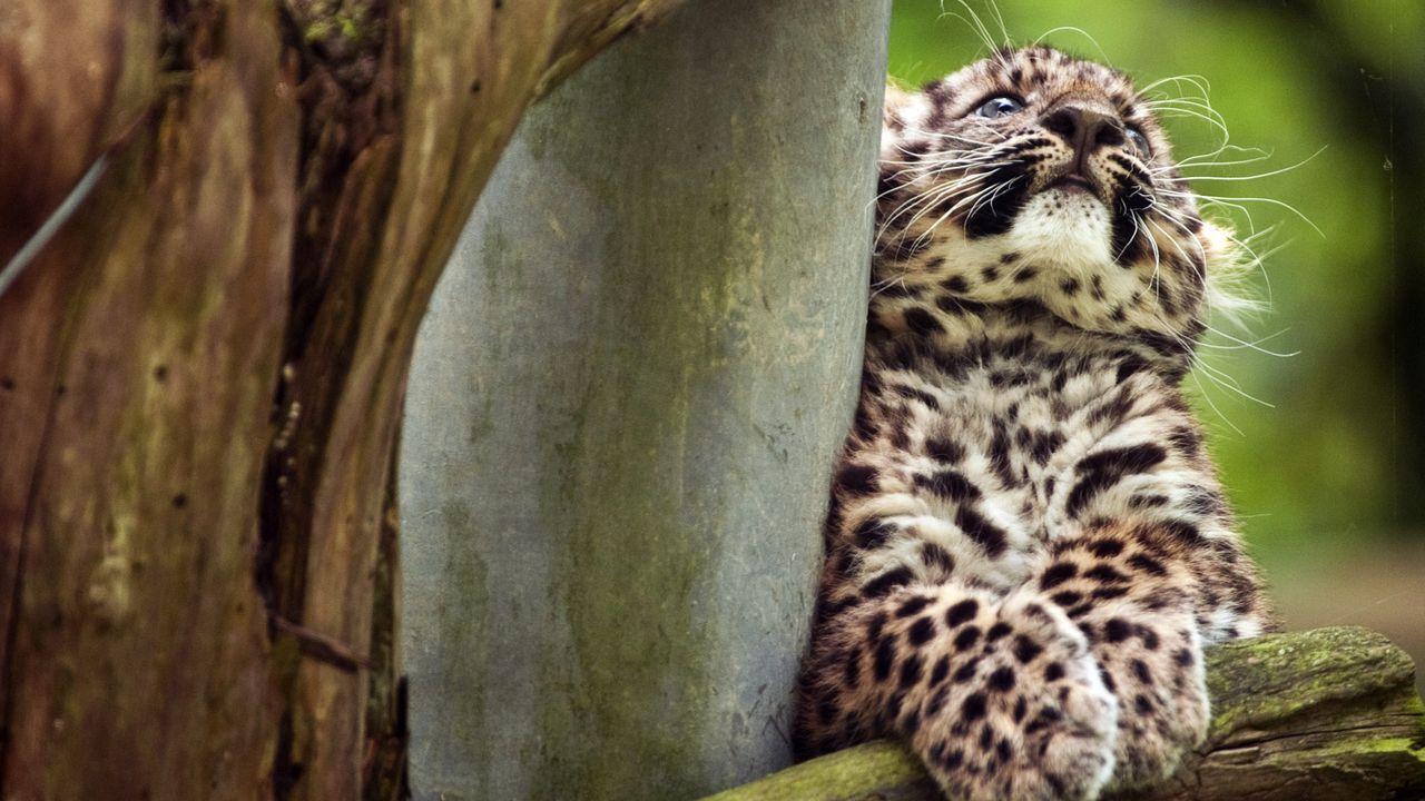 leopard-12-07-11-AFP - Bildquelle: AFP