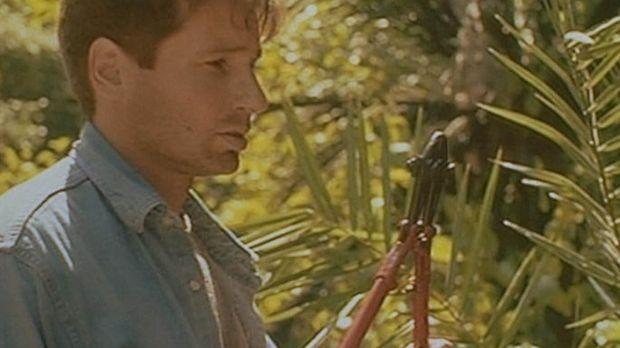 Mulder (David Duchovny) dringt auf seiner Suche nach geheimnisvollen Botschaf...