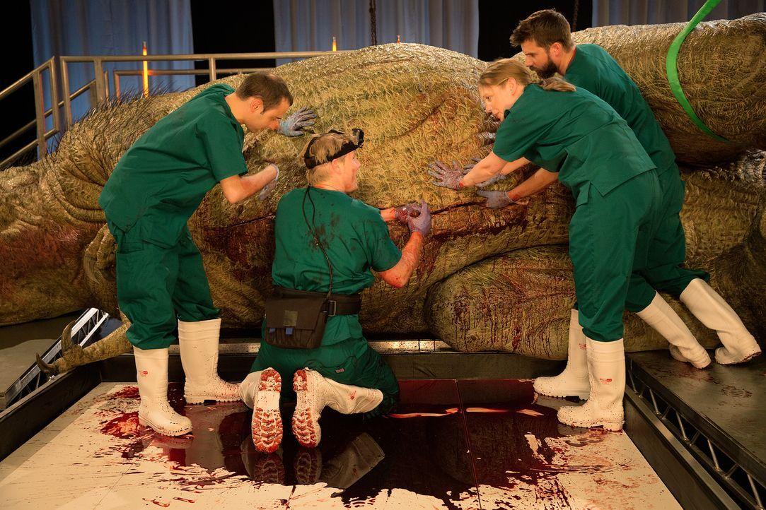 Diese beeindruckende Doku präsentiert dem Zuschauer eine realistische Autopsie eines T-Rex' - und so enthält das Replika-Modell aufwendig gestaltete... - Bildquelle: National Geographic Channels/Stuart Freedman