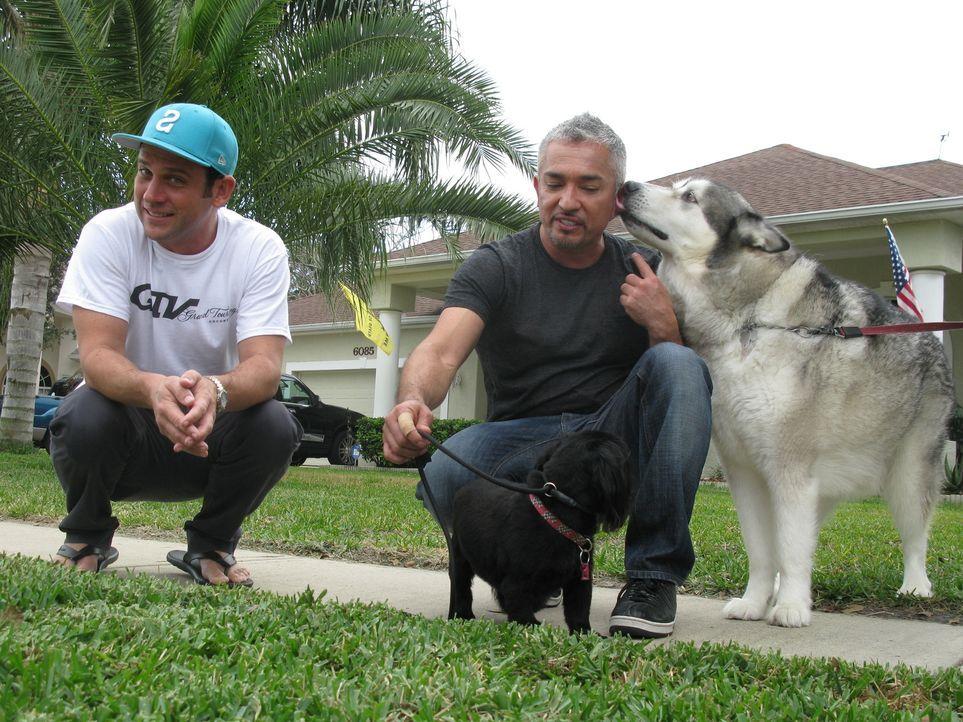 Heute stattet Cesar (r.) dem Rennfahrer Kevin Harvick (l.) einen Besuch ab. Familienhund Lo bellt fast ununterbrochen und schnappt nach jedem, der i... - Bildquelle: Ryan Cass MPH - Emery/Sumner Joint Venture
