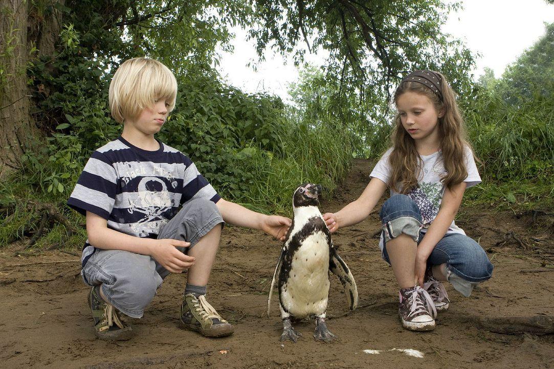 """Hanna (Julia Scherlitz, r.) und Tom (Tom Hoßbach, l.) haben ihren Liebling """"Schulze"""" entführt, um ihn vor dem Einschläfern zu retten. Der Pinguin... - Bildquelle: Sat.1"""