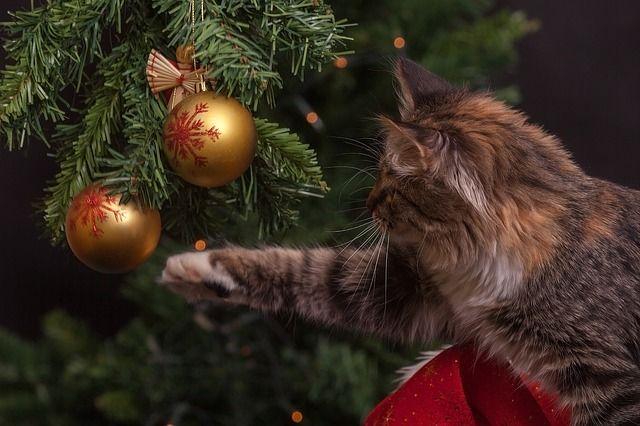 Dritte Adventswoche (12.-18. Dezember)-&... - Bildquelle: