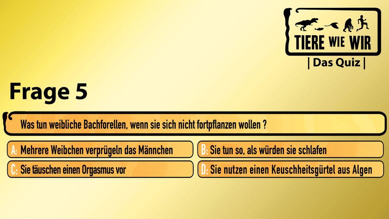 5_Frage_Bachforelle