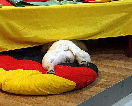 fruehstuecksfernsehen-studiohund-lotte-in-action-im-studio-027 - Bildquelle: Ingo Gauss