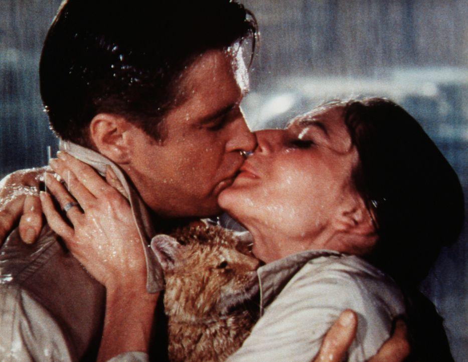 Endlich gestehen sich Holly (Audrey Hepburn, r.) und Paul (George Peppard, l.) ihre Liebe ein ... - Bildquelle: Paramount Pictures
