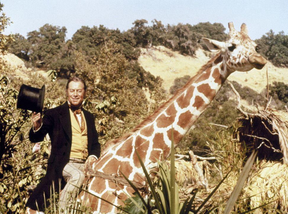 Dr. John Dolittle (Rex Harrison) hat diese Giraffe überredet, ihn ein Stück mitzunehmen ...