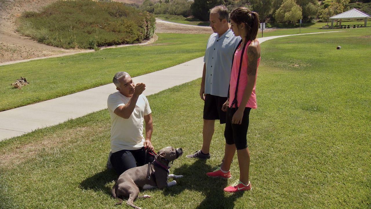 Joe (M.) macht sich Sorgen um ihre Tochter Sydney (r.) und deren aggressiven Hund Nani. Als Cesar (l.) den beiden das Verhalten der Hündin erklärt,... - Bildquelle: NGC/ ITV Studios Ltd