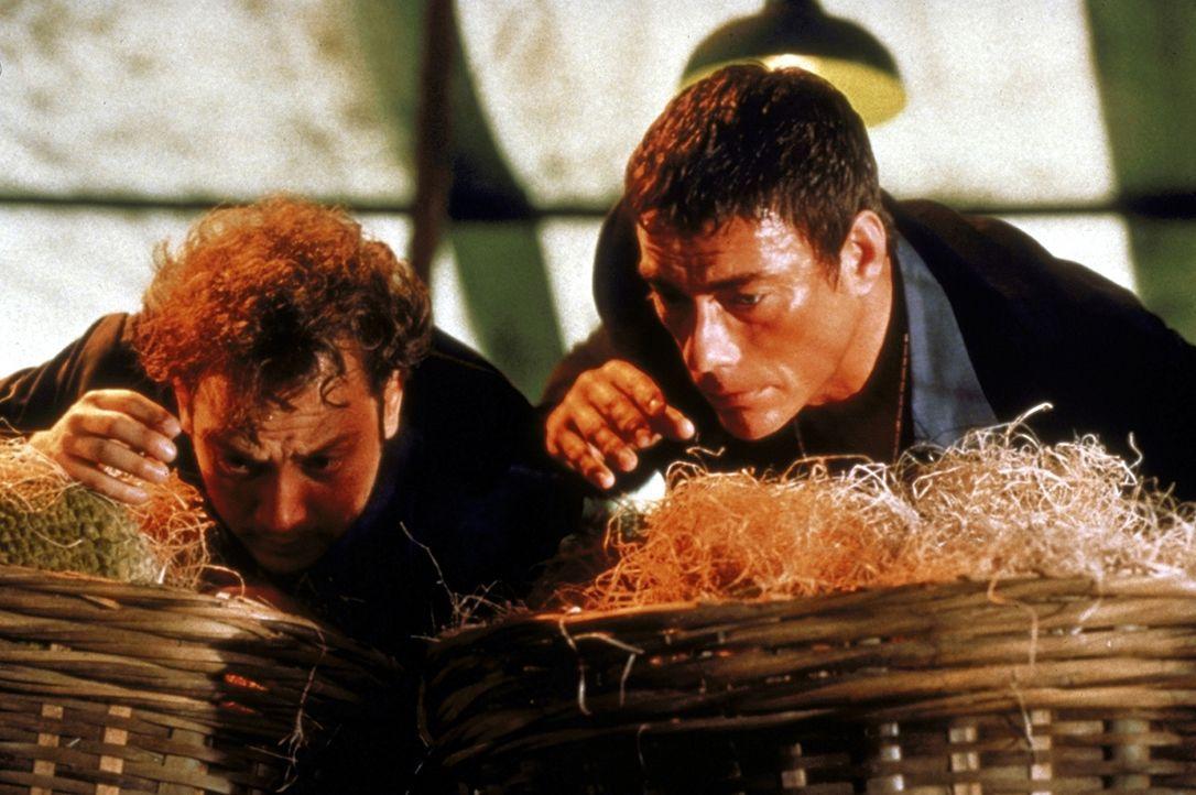 Marcus Ray (Jean-Claude van Damme, r.) und sein Partner Tommy Hendricks (Rob Schneider, l.) müssen um ihr Leben kämpfen - doch sie wissen sich ihrer... - Bildquelle: TriStar Pictures