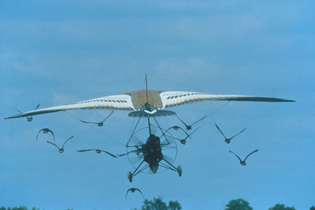 Es hat geklappt: Amy kann mit den Wildgänsen fliegen ... - Bildquelle: Columbia Pictures