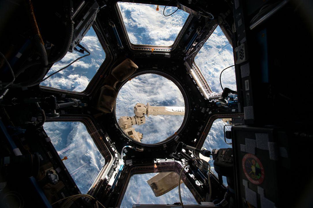 Im August 2014 machten russische Astronauten eine erstaunliche Entdeckung im All. Die Fenster der Raumstation waren mit lebendem Plankton bedeckt. W... - Bildquelle: Public Domain