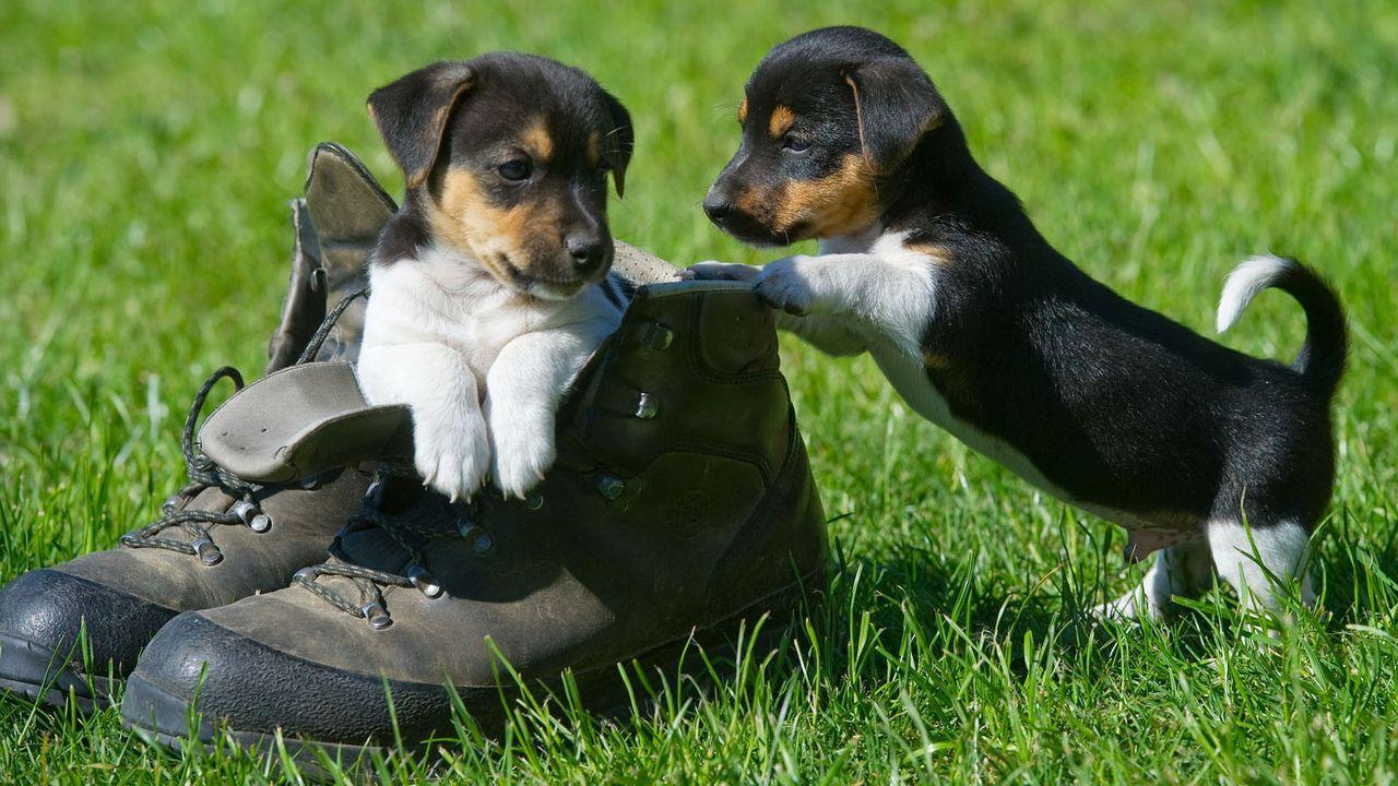 HundeWelpe2 - Bildquelle: dpa