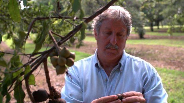 Der Weg der Macadamia