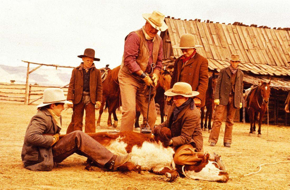 Die unerfahrenen Knaben muss der Cowboy Wil Andersen (John Wayne) von der Pike auf neu einweisen - ein nahezu aussichtsloses Unterfangen ... - Bildquelle: Warner Bros.