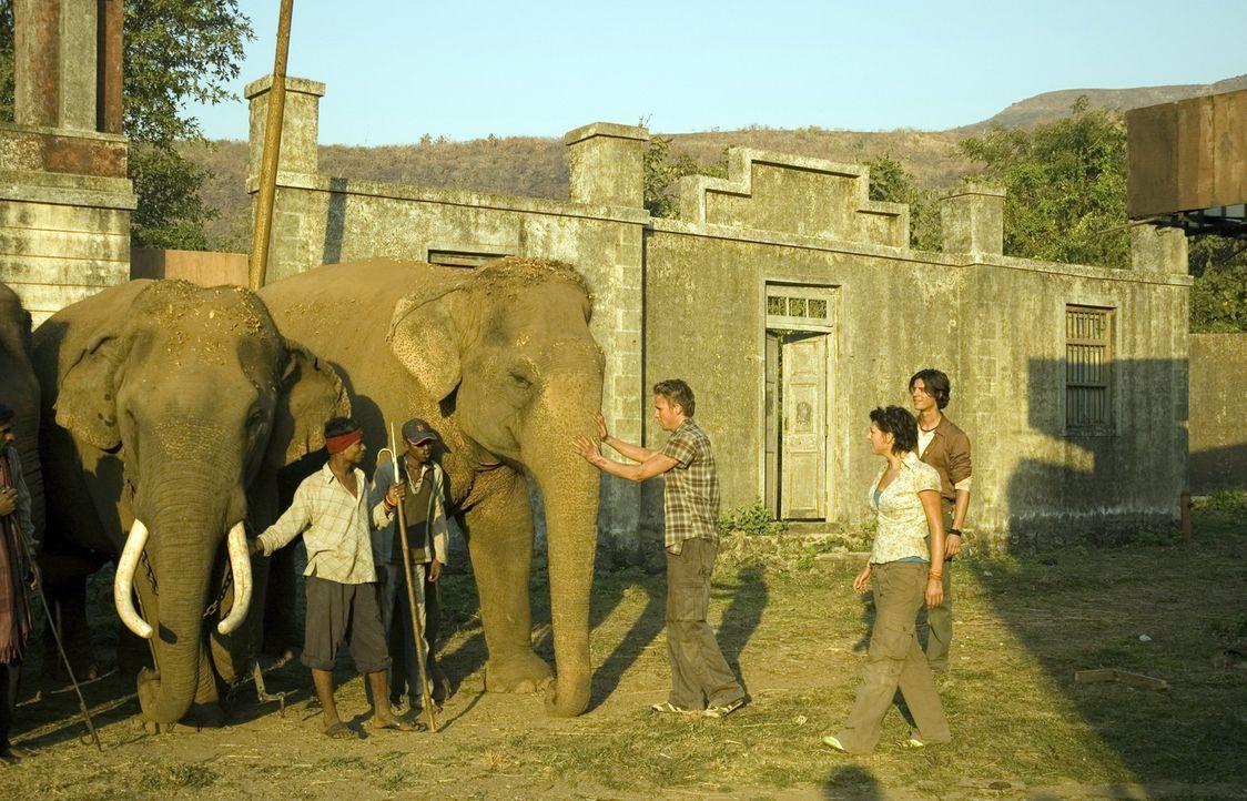 Eigentlich hatten die Zooranger andere Urlaubspläne, doch dann erfahren sie von einem indischen Dorf, in dem alle Arbeitselefanten verschwunden sin... - Bildquelle: Jan van den Nievwenhuijzen