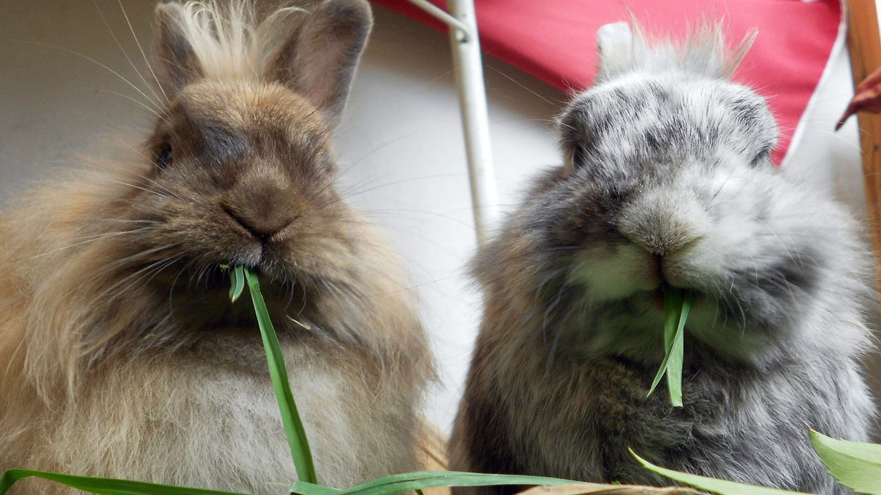 Kaninchen - Bildquelle: dpa/tmn