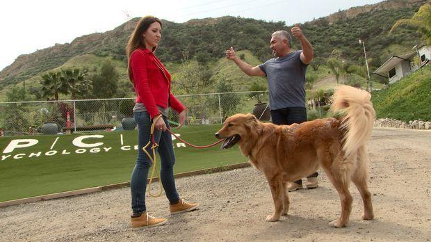 Mit gezieltem Training versucht Cesar (r.), Leon und seinem Frauchen Caitlin...