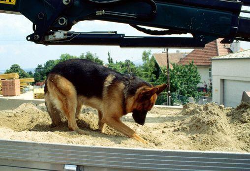"""Rex setzt seine Spürnase ein und """"durchsucht"""" einen LKW nach belast..."""