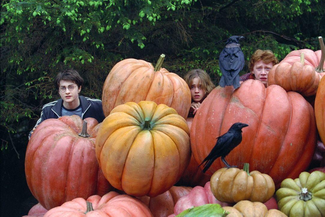 Noch wissen Harry Potter (Daniel Radcliffe, l.), Ron (Rupert Grint, r.) und Hermine (Emma Watson, M.) nicht, wer ihr wahrer Feind ist, der ihnen nac... - Bildquelle: Warner Television