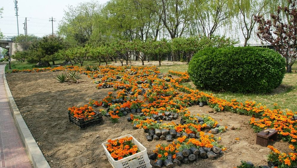 Gartenarbeiten Im Februar Sat 1 Ratgeber