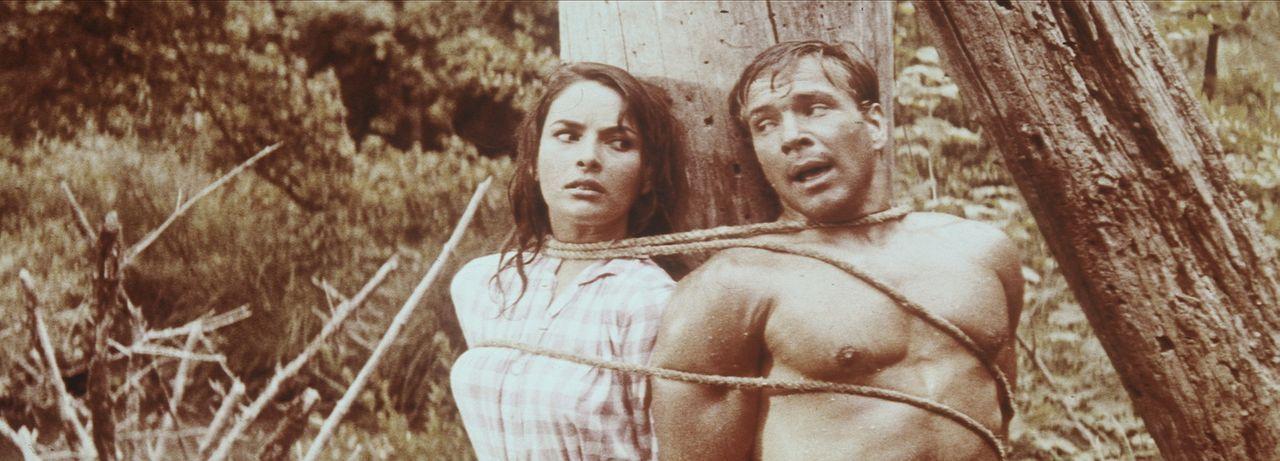 Am Marterpfahl gefesselt bangen Fred Engel (Götz George, r.) und Ellen Patterson (Karin Dor, l.) um ihr Leben ... - Bildquelle: Columbia Pictures