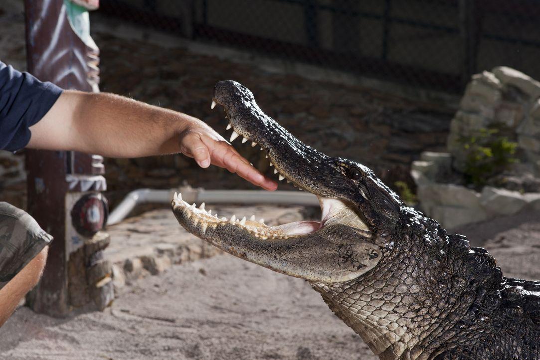 (1. Staffel) - Kennen keine Angst: die Gator Boys Paul Bedard und Jimmy Riffle ... - Bildquelle: Bob Croslin 2011 Discovery Communications