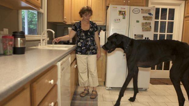 Bild Geschichte - Der größte Hund der Welt