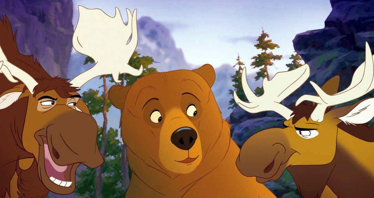 Als Kenai (M.) den beiden Elchen Benny (r.) und Björn (l.) erzählt, dass er eigentlich ein Junge ist, der sich nur in einen Bär verwandelt hat, h... - Bildquelle: Buena Vista Pictures Distribution. All Rights Reserved.