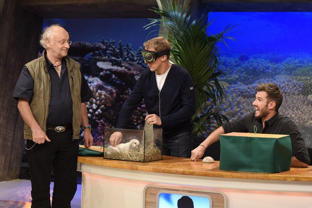 Dr. Wolf (l.) und Jochen Schropp (r.) sind gespannt, ob Oliver Pocher (M.) erkennt, was für ein Tier er da ertasten soll ... - Bildquelle: Martin Rottenkolber SAT.1