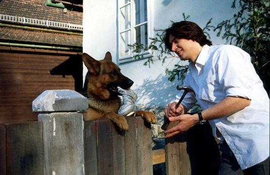 Kommissar Rex - Kommissar Moser (Tobias Moretti, r.) will endlich seinen Zaun...