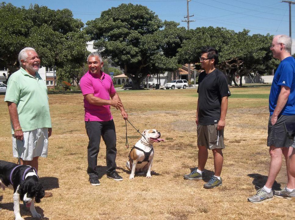 Arturo (l.) wendet sich hilfesuchend an Cesar (2.v.l.), nachdem der Hund seiner Nachbarn Sam (2.v.r.) und Jim (r.) seinen Hund angegriffen hat. Kann... - Bildquelle: NGC/ ITV Studios Ltd