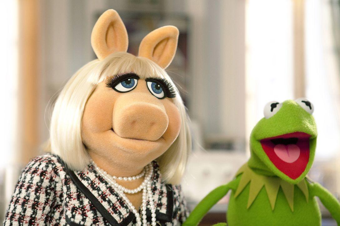 Der fiese Multimillionär Richman will die Muppet-Studios abreißen lassen. Kermit (r.) und Miss Piggy (l.) setzen sämtliche Hebel in Bewegung, um das... - Bildquelle: The Muppets Studio, LLC. All rights reserved