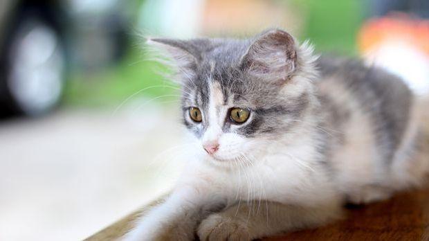 Katze 2_Pixabay.com