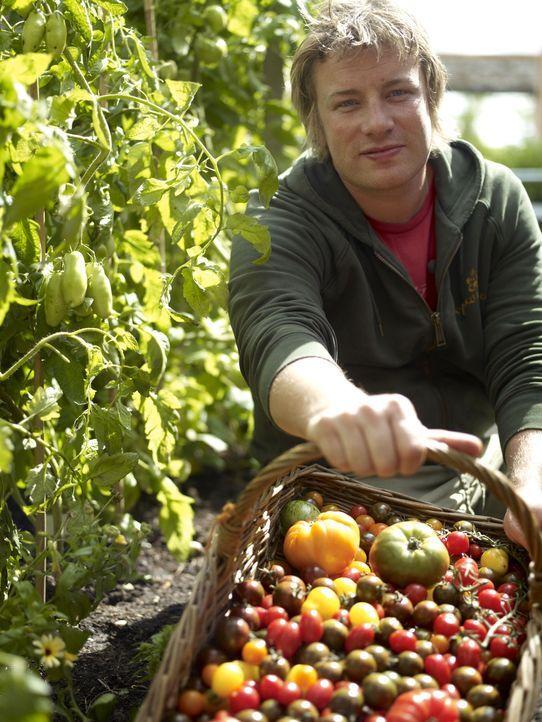 (1. Staffel) - Jamie Oliver hat den Garten seines Hauses in Essex in ein grünes Paradies verwandelt und zeigt, wie einfach jeder selber Gemüse anbau... - Bildquelle: David Loftus Fremantle