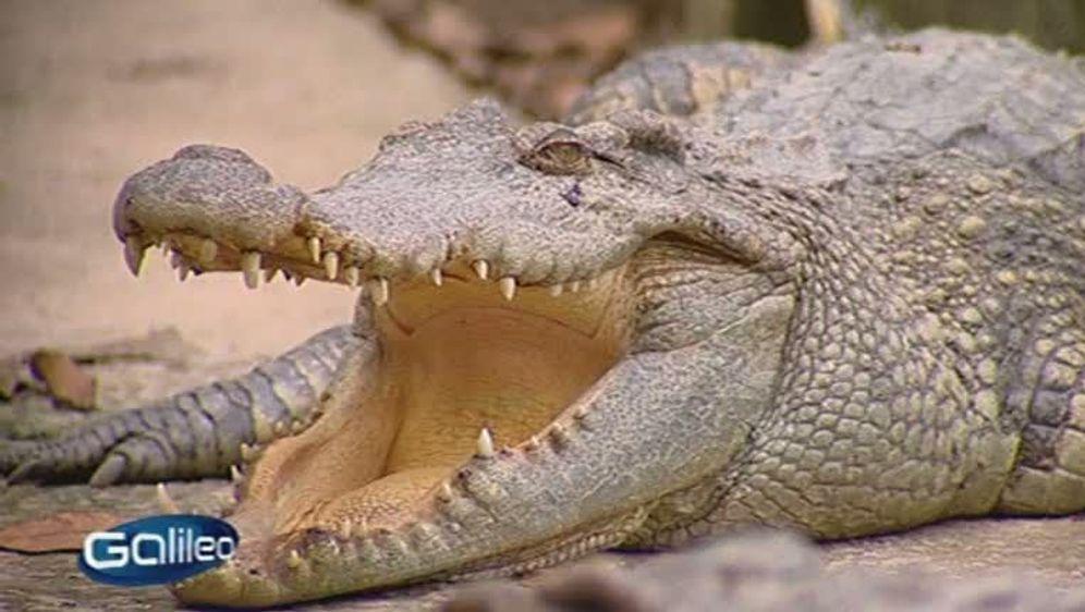 Krokodil-Leder