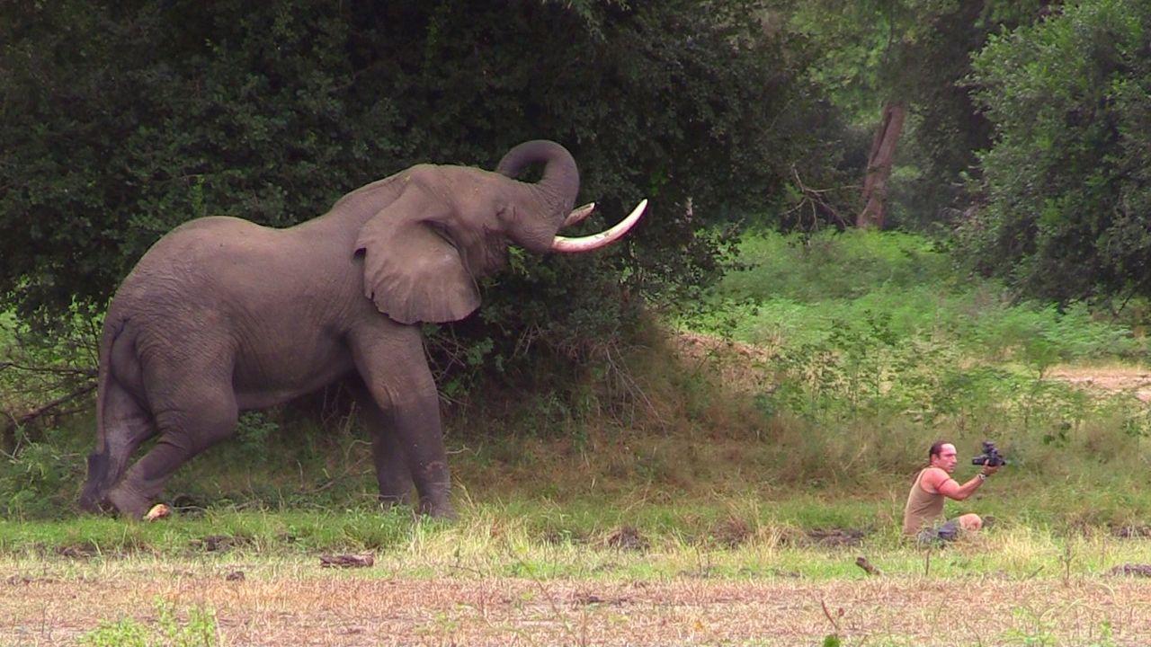 Elefantenbulle-posiert-in-Richards-Naehe - Bildquelle: kabel eins