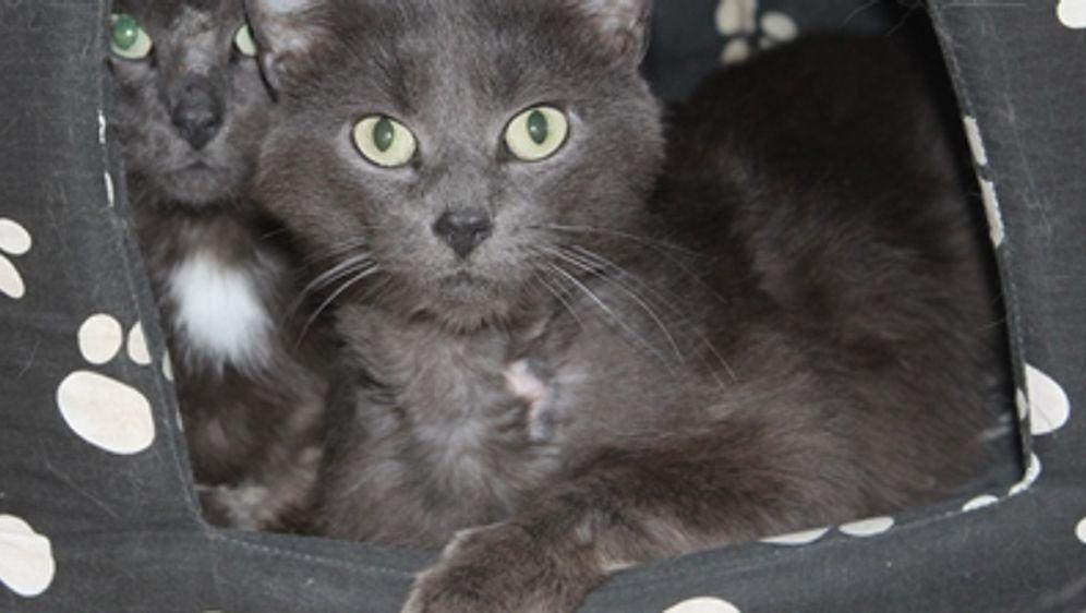 Katzen-Mischlinge