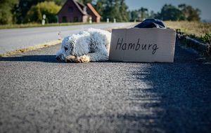Hund-Hamburg