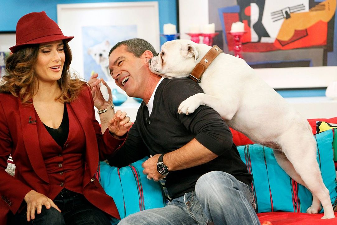 fruehstuecksfernsehen-studiohund-lotte-in-action-im-studio-127 - Bildquelle: Ingo Gauss
